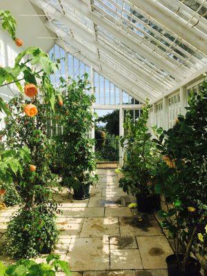 Candie Garden Greenhouse